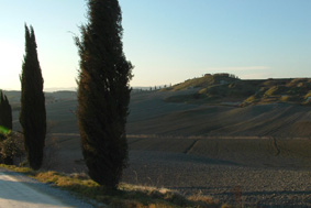 Tuscany roadside with trademark Cypress trees